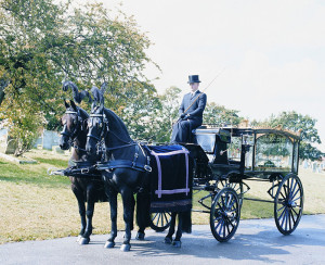 Horses  - Black