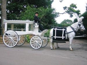 Horses - White