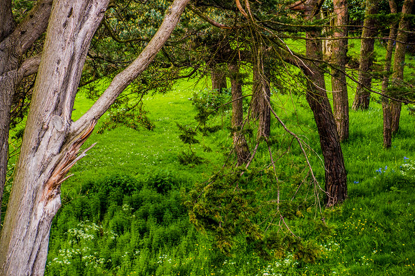 Burial - Woodland