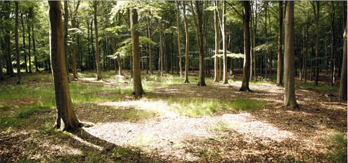 Memorials Woodland